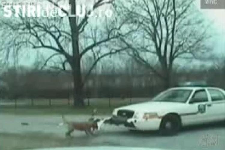 """Caine """"arestat"""" in SUA pentru ca a atacat o masina de politie"""