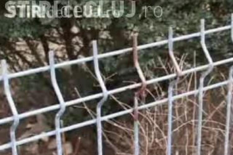 In urma accidentului de duminica, primaria Cluj-Napoca ia in calcul modificarea gardurilor!