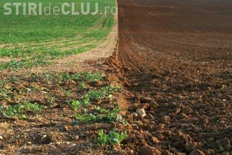 80.000 de hectare de teren arabil, abandonate in judetul Cluj