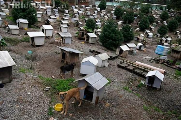 """""""Mahalaua cateilor"""" in Brazilia. Un adevarat oras pentru 1.600 de caini si 200 de pisici GALERIE FOTO"""