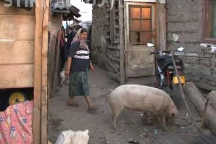 Mascatii au descins in tabara de tigani din Gherla - VEZI VIDEO