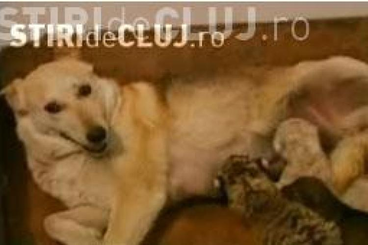 Doi pui de tigru bengalez au fost adoptati de o ...catelusa VIDEO