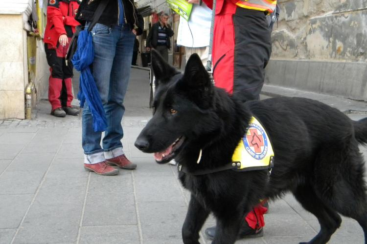 Hiperparada animalelor la Cluj Napoca! Demonstratii cu cainii de salvare, disciplina si paza  FOTO