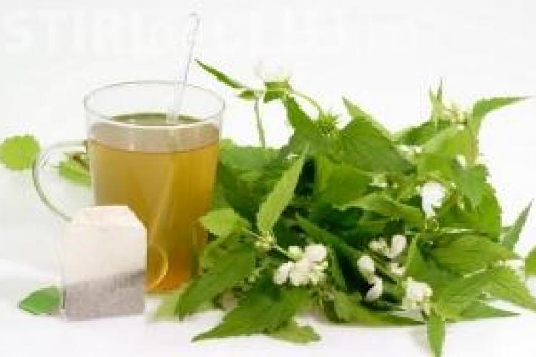 De maine, multe dintre remediile pe baza de plante  din Romania vor disparea!