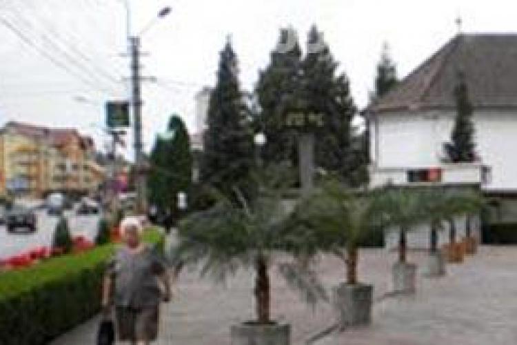 Palmieri in Campia Turzii, amplasati pe marginea drumului national  FOTO