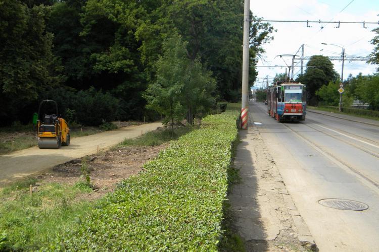 Satena din PSD, Aurelia Cristea, a comis-o din nou. Primaria Cluj: PSD a confundat pista de biciclisti din Parcul Central cu linia de tramvai FOTO