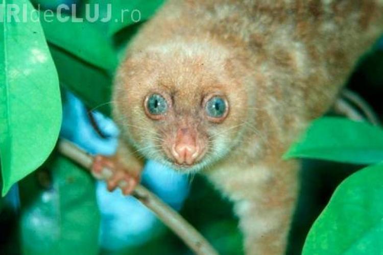 Vezi fotografii cu speciile noi de animale descoperite in Noua Guinee