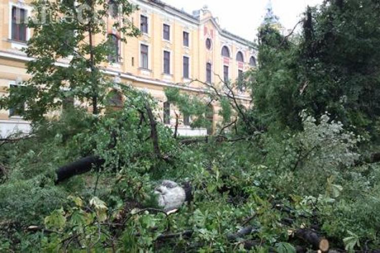 Zeci de copaci, culcati la pamant in parcul din spatele Teatrului National din Cluj-Napoca de vijelie VIDEO si FOTO