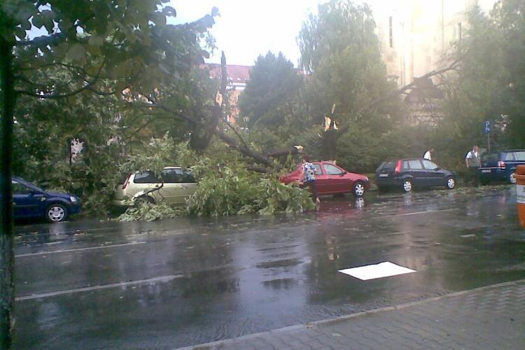 Vijelia care a lovit Clujul a doborat mai multi copaci. Un copac a cazut chiar langa Prefectura! FOTO