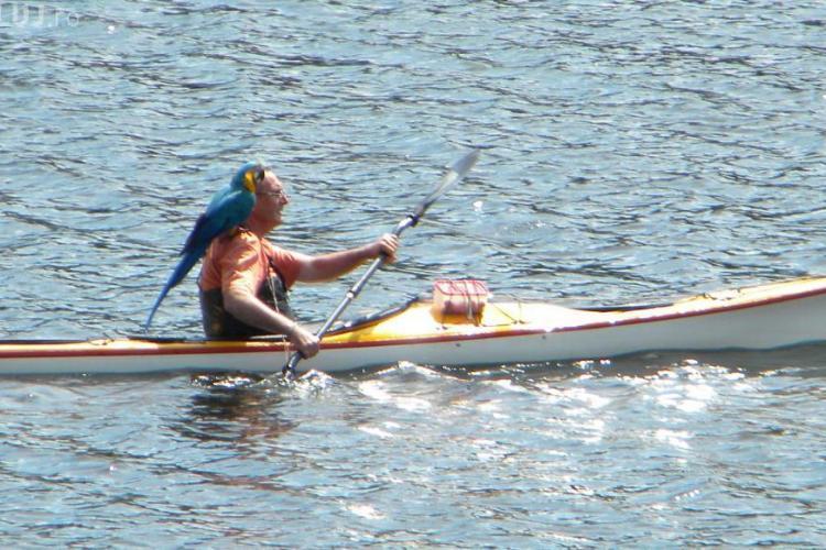 Piratul Belisului! Un barbat a fost fotografiat cu un papagal din rasa Ara pe umar in timpul unei iesiri pe apa STIREA CITITORULUI FOTO