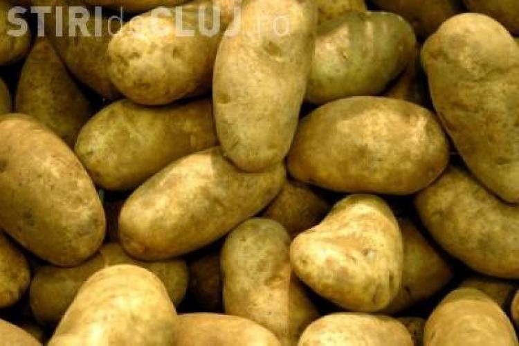 Cartofii mari sunt toxici si nu au substante hranitoare