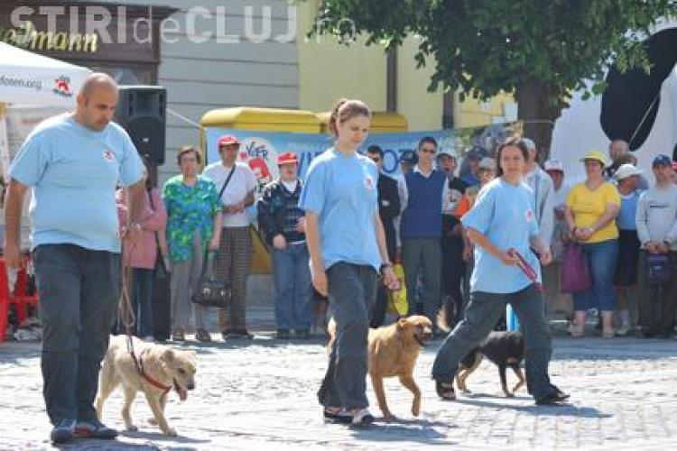 Demonstratie cu caini maidanezi, vineri, pe platoul Expo Transilvania din Cluj-Napoca