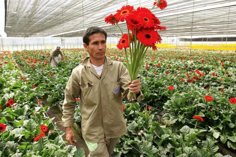 Florile olandeze blocate in vamile romanesti! Raspuns dur la anuntul ca Olanda se opune aderarii la Schengen