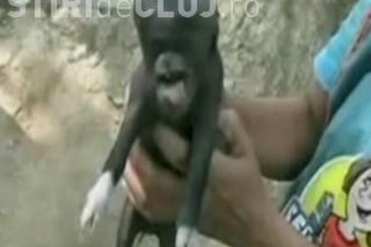 Porc cu cap de om in Guatemala! Localnicii dau vine pe extraterestrii VIDEO
