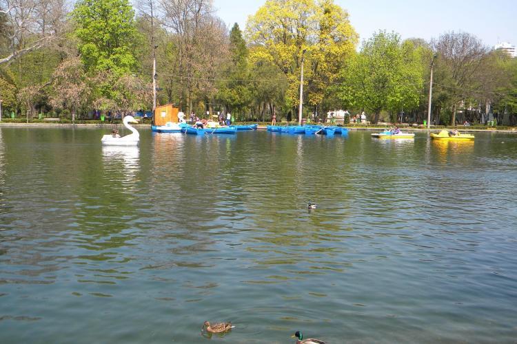 Rosal a castigat licitatia privind administrarea spatiilor verzi din Cluj-Napoca! Patronul U Cluj a pierdut