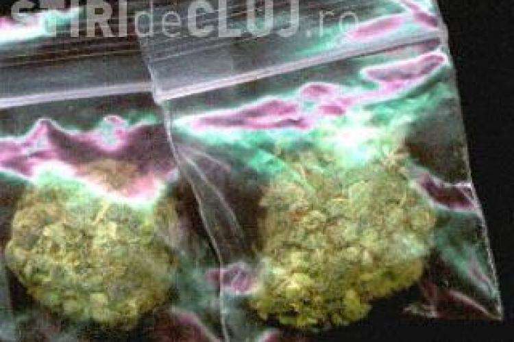 Traficantii de cannabis, prinsi vineri la Cluj, actionau ca in SUA! Au vrut sa vanda droguri si ofiterului DIICOT sub acoperire