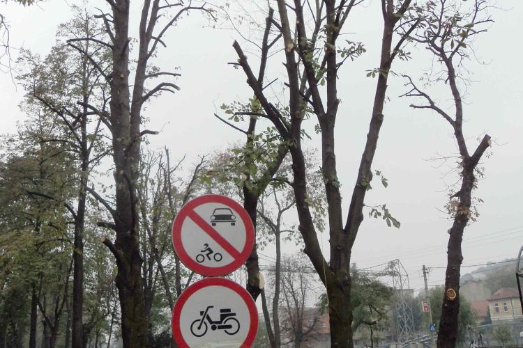 """Copacii din Parcul Central """"toaletati"""" cu drujba, acuza GAS Cluj"""