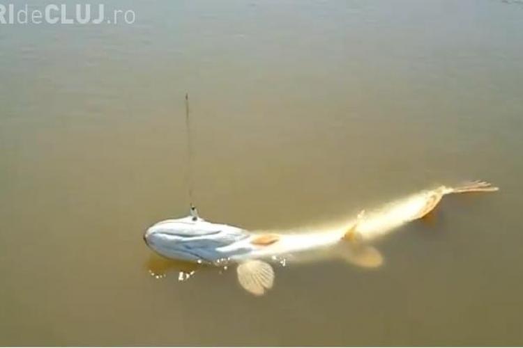 Lacul Stiucii de la Sacalaia are peste! Vezi cum arata o stiuca de 5,7 kilograme VIDEO