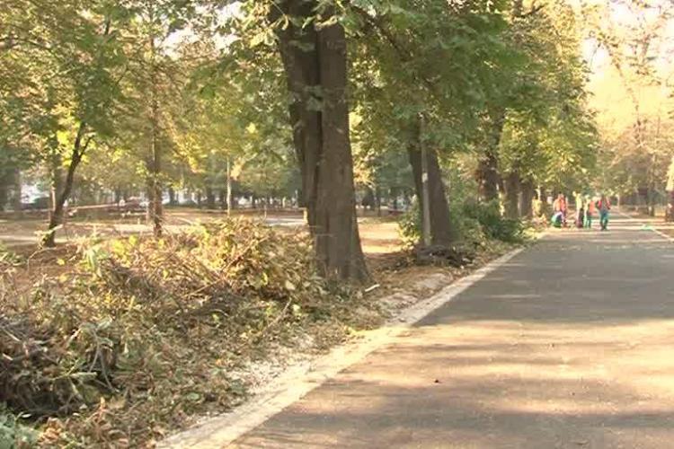 Afla motivul pentru care sunt toaletati arborii din Parcul Central! Ecologistii protesteaza VIDEO