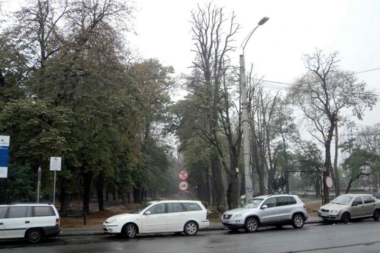 Ecologistii din oras ii cheama pe clujeni sa adopte un copac din Parcul Central