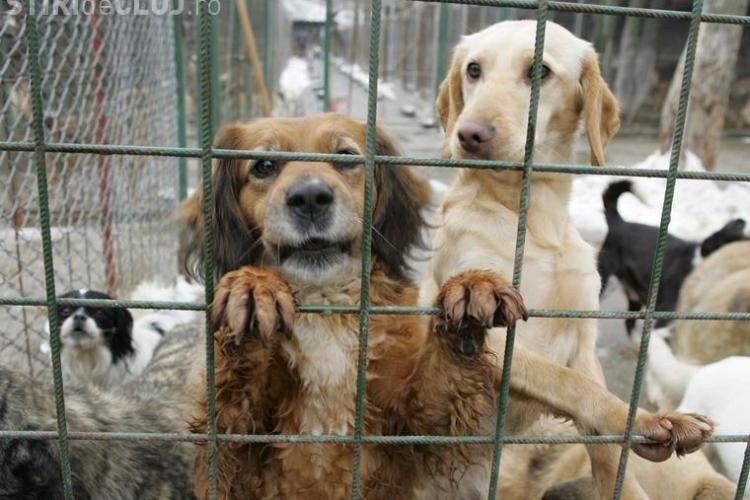 Deputatii au hotarat: cainii comunitari pot fi eutanasiati