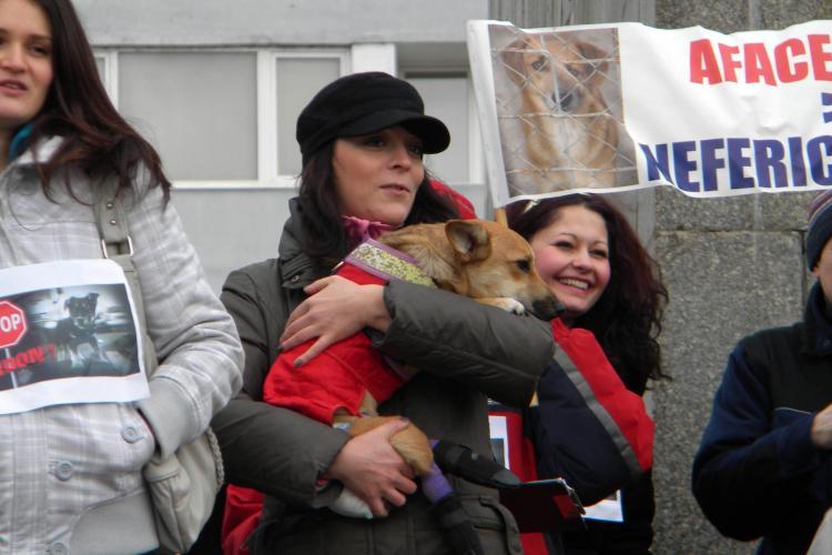 """Miting in Piata Mihai Viteazu organizat de NUCA: """"Stop abandonului cainilor"""" VIDEO si FOTO"""