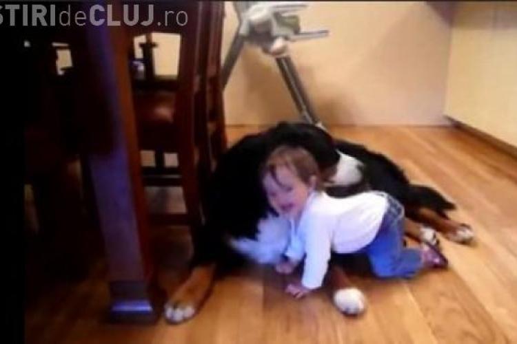 Un bebelus rade molipsitor in timp ce un caine il linge pe fata VIDEO
