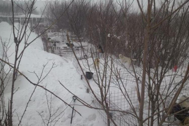 Tragedie: Peste 200 de caini au murit la Lehliu, sub acoperisurile custilor pline de zapada VIDEO