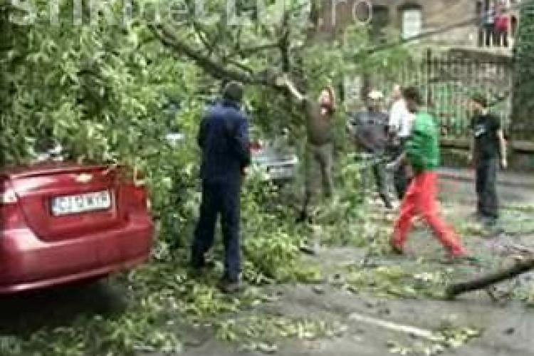 VIDEO - Un copac s-a prabusit pe strada Clinicilor peste trei autoturisme. Soferii nu au fost raniti, dar traficul a fost blocat
