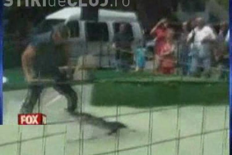 VIDEO - A ramas fara un brat dupa ce s-a luptat cu un crocodil - Imagini SOCANTE