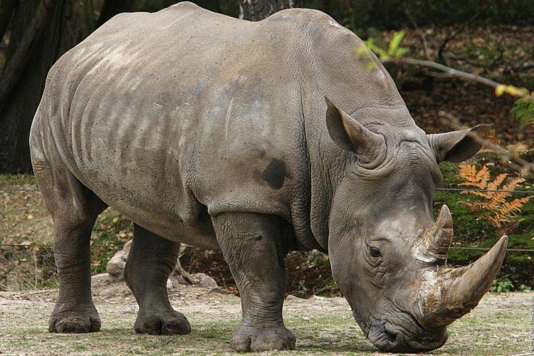 Gradina Zoo de la Turda va fi deschisa in iunie, cu girafe si rinoceri din Africa