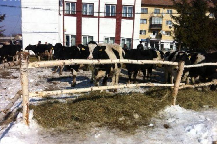 De 8 martie, femeile din Rasca au primit 46 de vaci cadou de la irlandezi FOTO