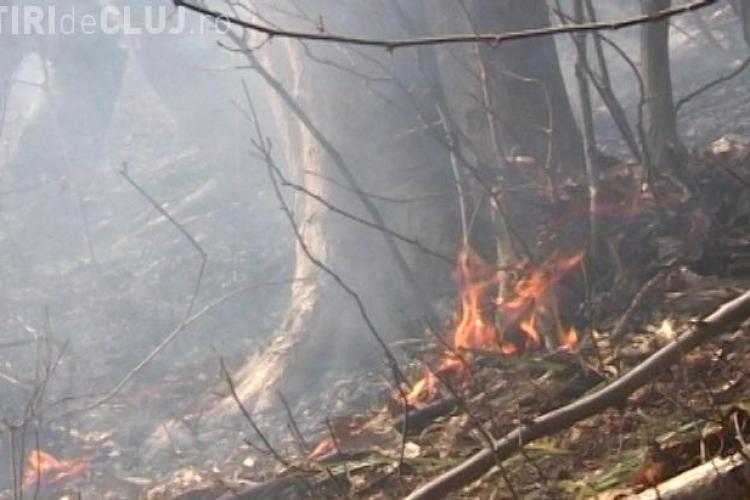 Incendiu in Viile Dejului! O livada a luat foc VIDEO