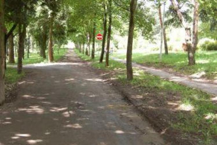 Elevii de la Scoala Internationala planteaza arbori in parcul Detunata din Gheorgheni