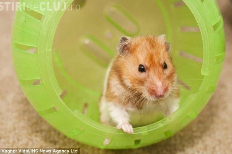 "Un hamster a INVIAT dupa ce a fost ingropat. Il cheama acum ""Iisus"" FOTO"