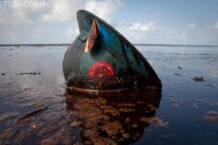 Golful Mexic, dupa 2 ani de la catastrofa ecologica: delfini morti, crevete fara ochi si crabi plini de gauri