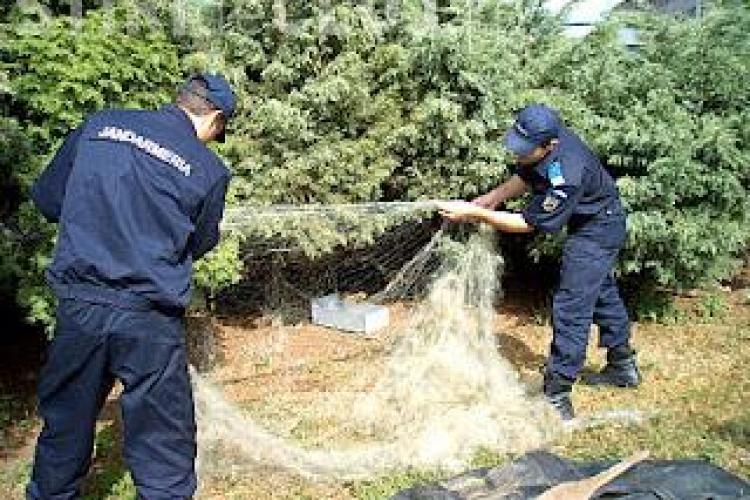 Braconieri prinsi la Fizesu Gherlii cu 2.300 de metri de plasa monifilament