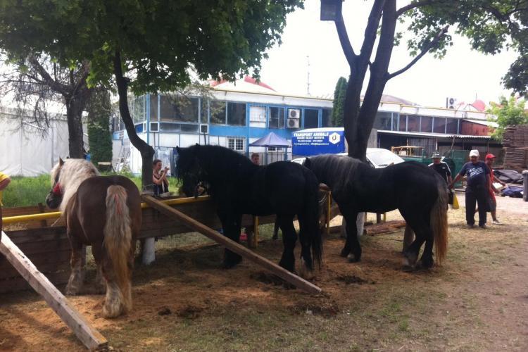Quadrat, calul de 15.000 de euro, prezentat la Agraria 2012