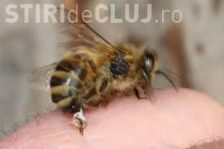 Tratament cu venin de albine!