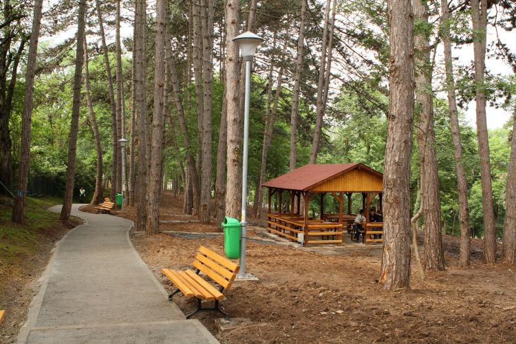 Cum arata padurea-parc de 3,1 hectare inaugurata de Primarie si USAMV pe strada Gheorghe Dima FOTO