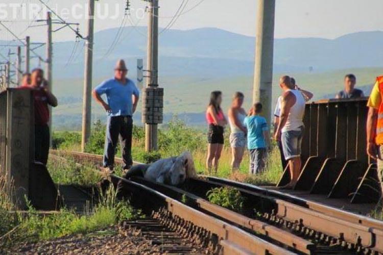 Un cal a ramas intepenit intre sinele de cale ferata la Gherla! Imagini DRAMATICE VIDEO