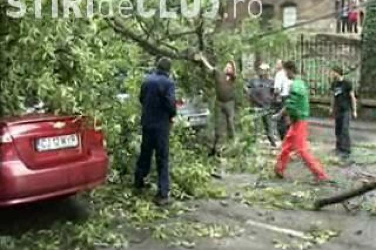 Furtuna a doborat un copac pe Drumul National 1C, intre Bontida si Fundatura