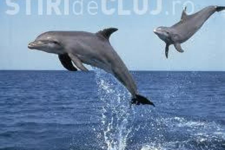 O mamă delfin îşi cară puiul mort VIDEO