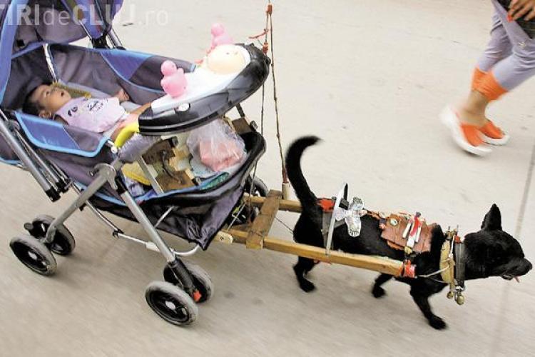 Un chinez și-a dresat câinele să îi plimbe nepoata FOTO