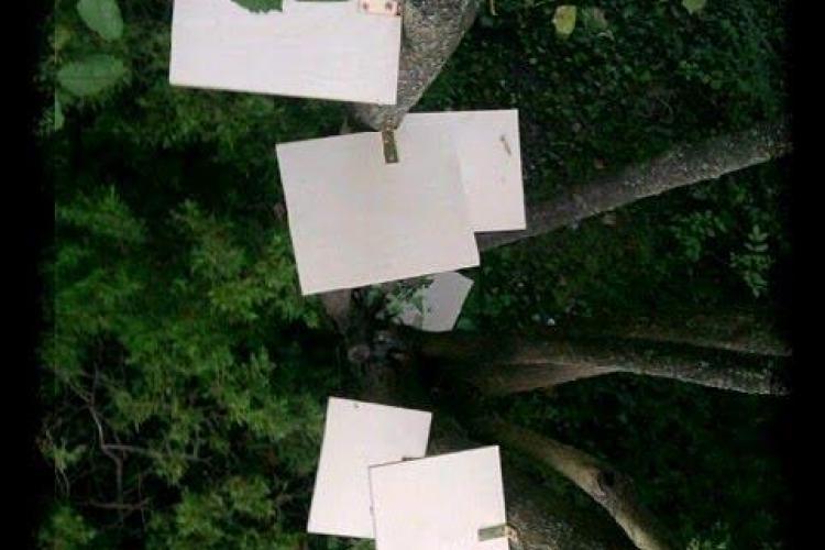 """""""Un bebe, un copac"""" - proiectul suflet pentru Cluj-Napoca"""