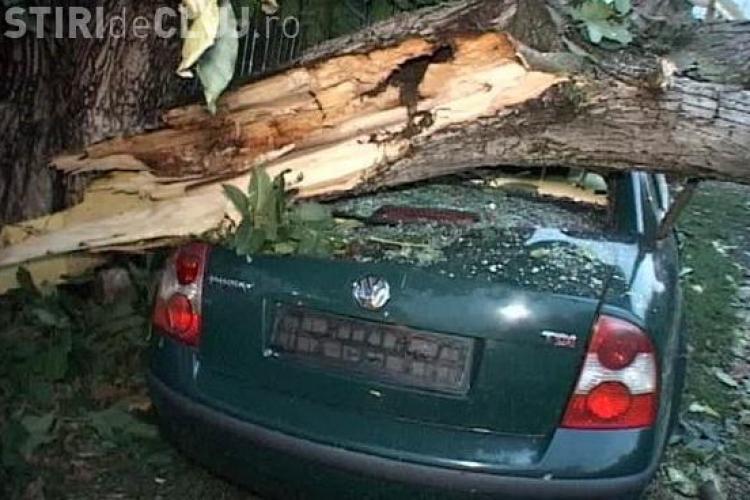 Furtună la Dej! Un copac s-a prăbușit peste o mașină VIDEO