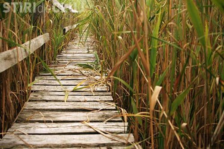 Ecotransilvania a primit o finanțare americană pentru conservarea mediului în bazinul Fizeșului