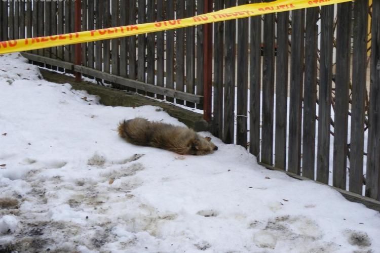 Polițistul clujean care a împușcat câinii vecinilor, amendat cu 7.000 de lei