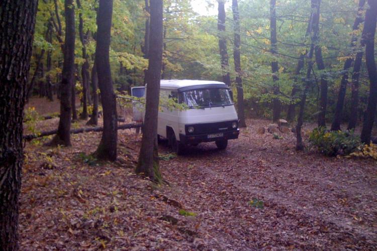Pădurea Făget, defrișată de zor! Cine ia măsuri? - ȘTIREA CITITORULUI - FOTO