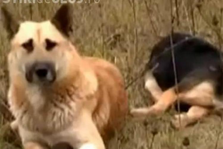 Un câine IMPRESIONEAZĂ întreaga lume: Nu şi-a părăsit partenera care a murit - VIDEO
